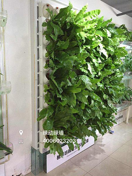 此项目:南开区私人别墅植物墙 施工单位:天津绿动绿墙工程有限公司